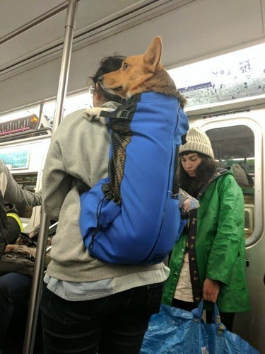 /funny/when-rebellion-meets-creativity-the-response-to-the-nyc-subway-dog-ban/img/dog01_MobileImageSizeReigNN.jpg