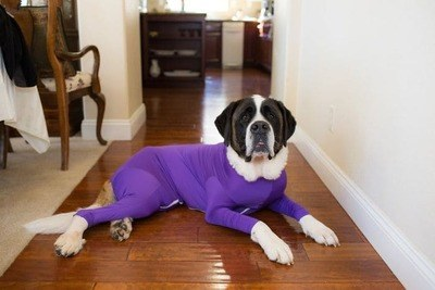 /trending/dog-onesies-that-protect-reduce-their-anxiety-and-keep-your-house-fur-free/img/onesie01_MobileImageSizeReigNN.jpg