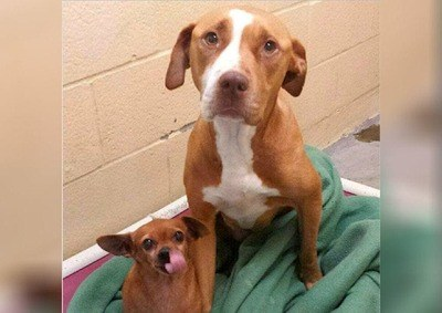/trending/the-special-bond-between-two-incredible-dogs/img/pitbullstory03_MobileImageSizeReigNN.jpg