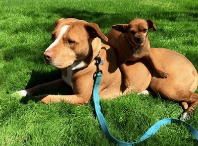 /trending/the-special-bond-between-two-incredible-dogs/img/pitbullstory04_MobileImageSizeReigNN.jpg