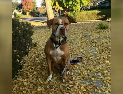 /trending/the-special-bond-between-two-incredible-dogs/img/pitbullstory09_MobileImageSizeReigNN.jpg