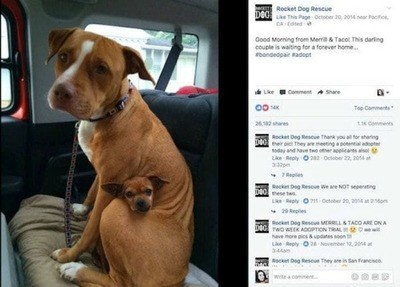 /trending/the-special-bond-between-two-incredible-dogs/img/pitbullstory13_MobileImageSizeReigNN.jpg