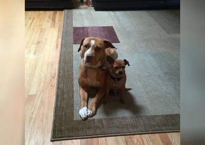 /trending/the-special-bond-between-two-incredible-dogs/img/pitbullstory24_MobileImageSizeReigNN.jpg