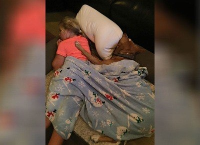 /trending/the-special-bond-between-two-incredible-dogs/img/pitbullstory26_MobileImageSizeReigNN.jpg