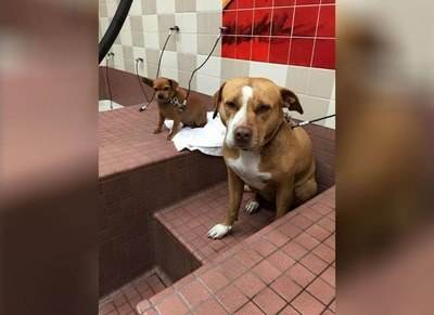 /trending/the-special-bond-between-two-incredible-dogs/img/pitbullstory33_MobileImageSizeReigNN.jpg