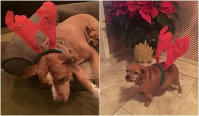 /trending/the-special-bond-between-two-incredible-dogs/img/pitbullstory36_MobileImageSizeReigNN.jpg